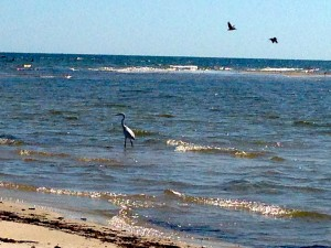 Fall On the Mississippi Gulf Coast